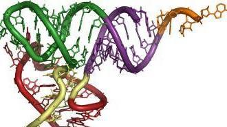 p3d_tRNA