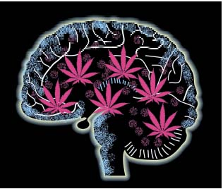 Effects-of-Cannabis