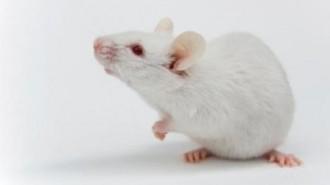 Raton-lab