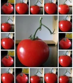 tomate_monochancla_flickr-249x300
