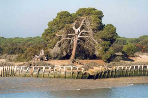 Doñana_National_Park_from_the_river