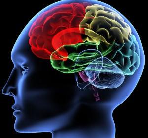 petit Brain1