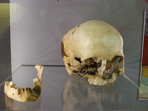 Restes_d'Homo_Sapiens_del_Paleolític_Superior,_procedents_de_la_cova_del_Parpalló,_Museu_de_Prehistòria_de_València