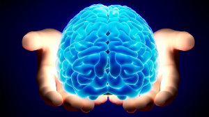 pp brain