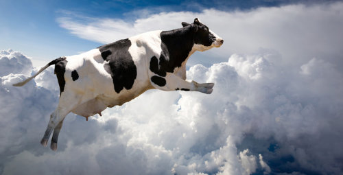 flying_cow_2