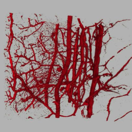 Sinapsis-ALlobet