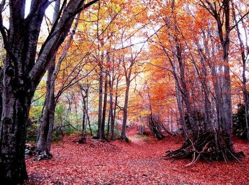 Bosc-Montseny_ARAIMA20130405_0161_3