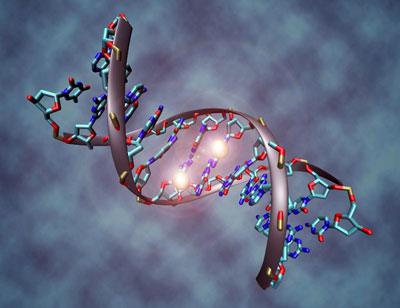 deriva-genetica-2-adn