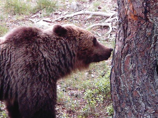 El-oso-home1