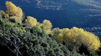 Montseny-Vista-Boscos