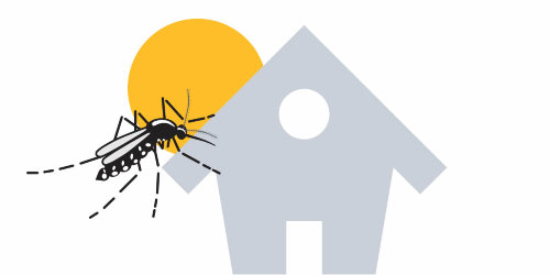 mosquitotigre