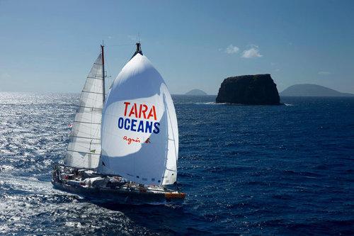tara-2015052111031230