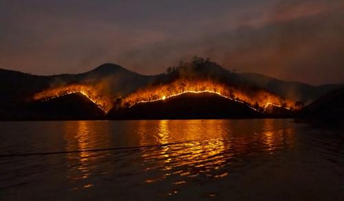 fire_rainforest_0
