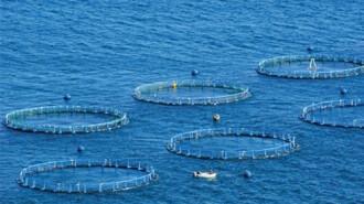 sector de l'aqüicultura